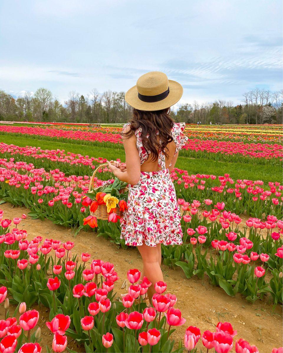 Tulips at Holland Ridge Farm